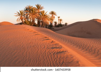 Colorful sunset in the desert above the oasis with palm trees and sand dunes.