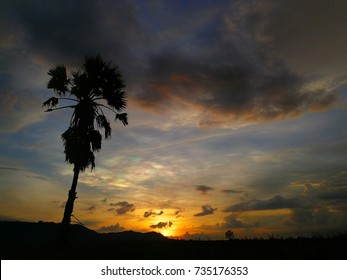 Colorful sunset landscape with Silhouettes of  palmyra tree (Borassus flabellifer).