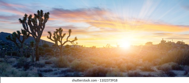 Colorful sunset light shining over panoramic desert landscape scene in Joshua Tree National Park, California