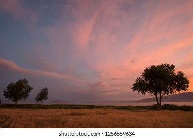 Colorful sunset looking past trees in landscape