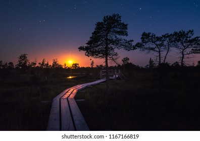 Colorful sunset, moon set over the swamp in a tropically warm summer nigth. Silhouettes of junipers and reflection in lake. Preserved outdoor territory of Ķemeri National park in Latvia.