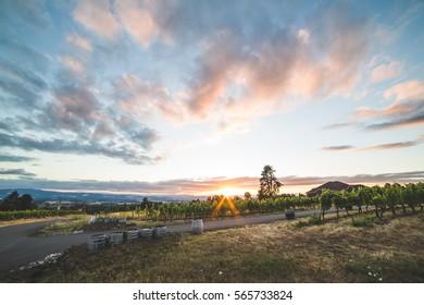 Colorful sunset over beautiful vineyard landscape. Beaverton, Oregon, USA.