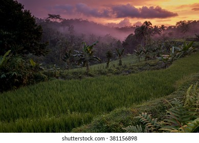 Colorful sunset over indonesian rainforest, Java, Indonesia