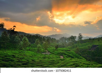 Colorful sunset over tea gardens located in hills in munnar.