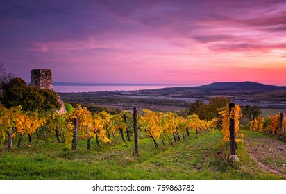 Colorful sunset over vineyards at lake Balaton, Hungary