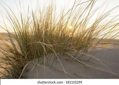 Colorful sunset in sandy dunes