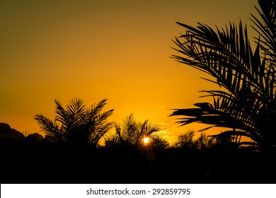 colorful of sunset sky,oil palm at farm the beautiful yellow sunset. Autumnal landscape.