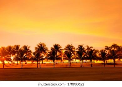 Colorful sunset or sunrise landscape with silhouettes of palm trees
