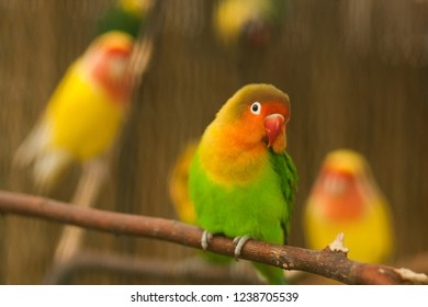 Colorful sweet Parrot