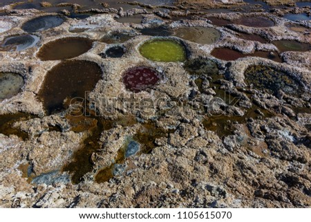 Colorful tilapia nests at the Salton Sea in southern California.