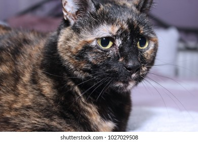 COLORFUL TORTOISESHELL CAT
