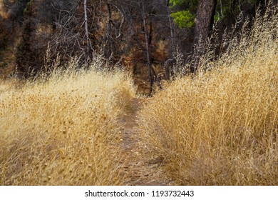 Colorful trampled path passing through a wheat sticks field