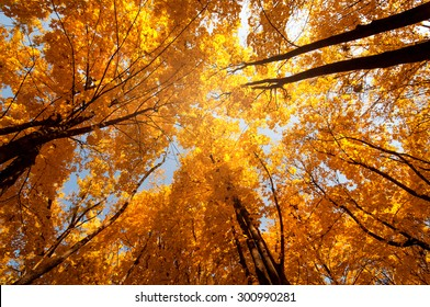 colorful tree branches in sunny forest, autumn natural background