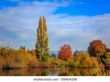 Colorful tree leaves by the lake, in Commonwealth Lake Park, Beaverton, Oregon.