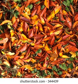 colorful tree leaves in fall (autumn)