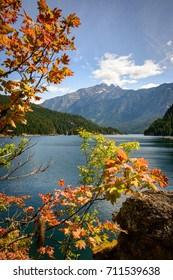 Colorful Tree and River View at North Cascades National Park