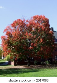 A Colorful Tree at Tufts University