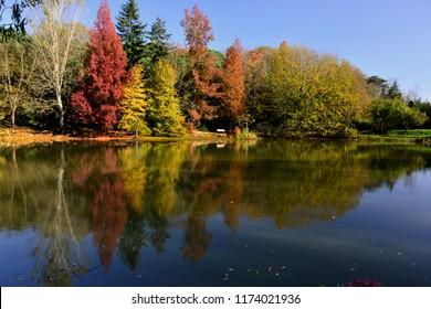 The colorful trees in the Ataturk Arboretum,Sariyer,Istanbul,Turkey.