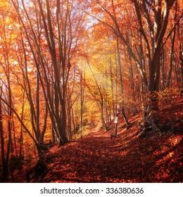 Colorful Trees In Autumn Forest near Rajecke Teplice, Slovakia