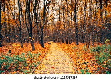 Colorful trees  in  autumn forest.Autumn natural background. Beautiful tree with colorful leaves