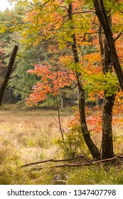 Colorful trees bordering meadow in New Hampshire forest