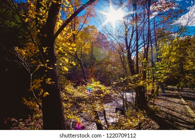 colorful trees by the river in autumn
