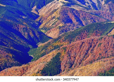 Colorful trees cover the mountains in autumn, Romania