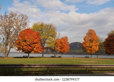 Colorful trees in the fall season. Autumn.