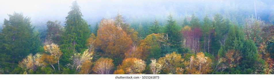 Colorful trees forest Oregon panorama banner masthead with copy space for advertising
