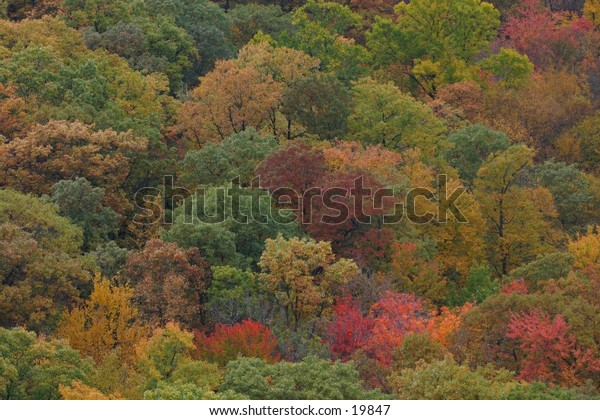 Colorful Trees Indian Summer