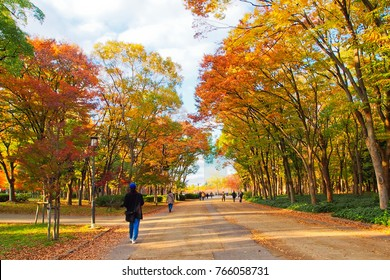 Colorful trees lining up along the boardwalk in osaka castle park osaka japan