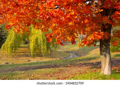 colorful trees in nakajima park