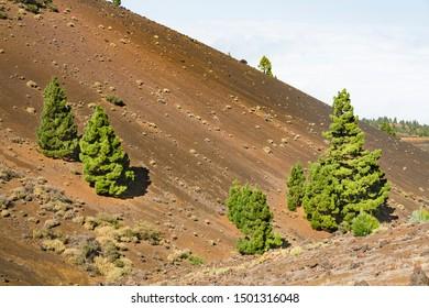 Colorful trees and red lava landscape along the Ruta de los Volcanes in La Palma, Spain.