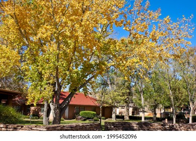 Colorful trees in a suburban neighborhood in Arizona.