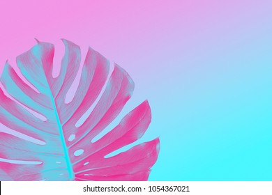 colorful trendy design monster leaf on a ultra violet, pink and blue duotone summer background