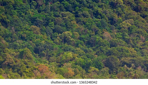 Colorful troipical forest on green mountain see from far point.