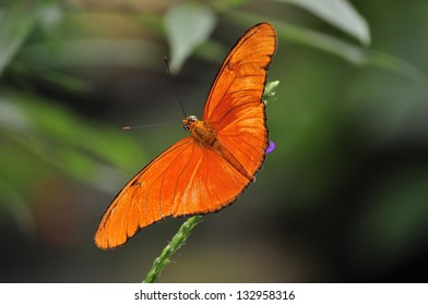 Colorful Tropical Butterfly