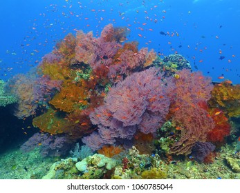 Colorful tropical coral reef with fish. Underwater scenery with corals in the blue water. Scuba diving with ocean wildlife.