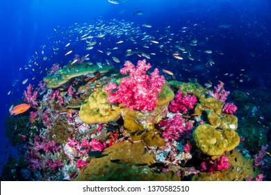 A colorful tropical coral reef scene