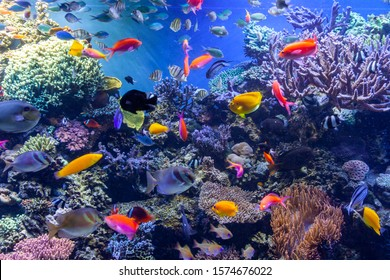 colorful tropical fish and coral
