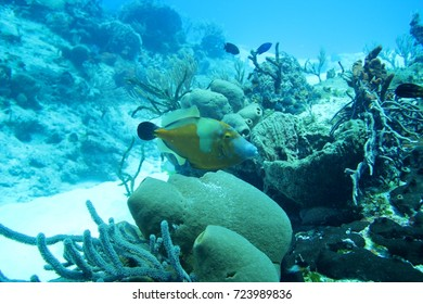 Colorful tropical fish and coral reef in the caribbean sea. Underwater scene background.
