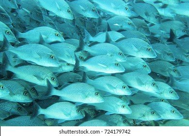 Colorful tropical fish and coral reef in the ocean. Scuba diving and marine life background.