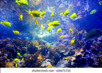 Colorful tropical fish living in coral reefs of Maui, Hawaii, USA