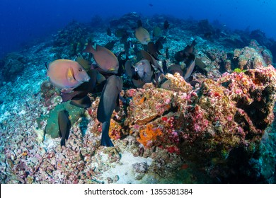 Colorful tropical fish on a coral reef in Thailand