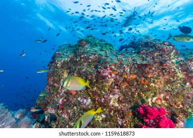 Colorful tropical fish swimming around a beautiful tropical coral reef