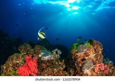 Colorful tropical fish swimming around a vibrant tropical coral reef system in Asia