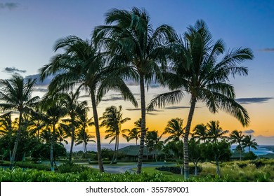 Colorful Tropical Hawaiian Sunset: Palm trees are seen in silhouette at sunset on the Big Island of Hawaii.