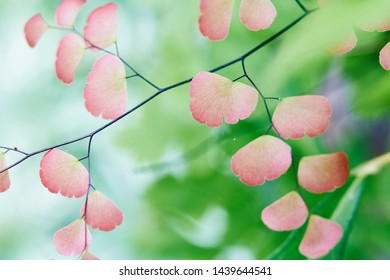 Colorful tropical plants leaves in detail
