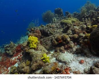 Aquatic Ecosystem Images, Stock Photos & Vectors   Shutterstock