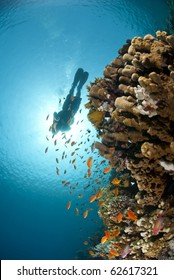 Colorful tropical reef scene buzzing with small fish and scuba diver silhouette against the sun. Thomas reef, Sharm el Sheikh, Red Sea, Egypt.